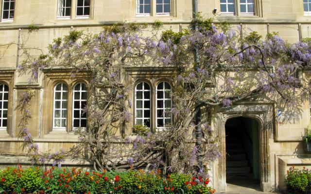 jesus college  second quad wisteria april 2009
